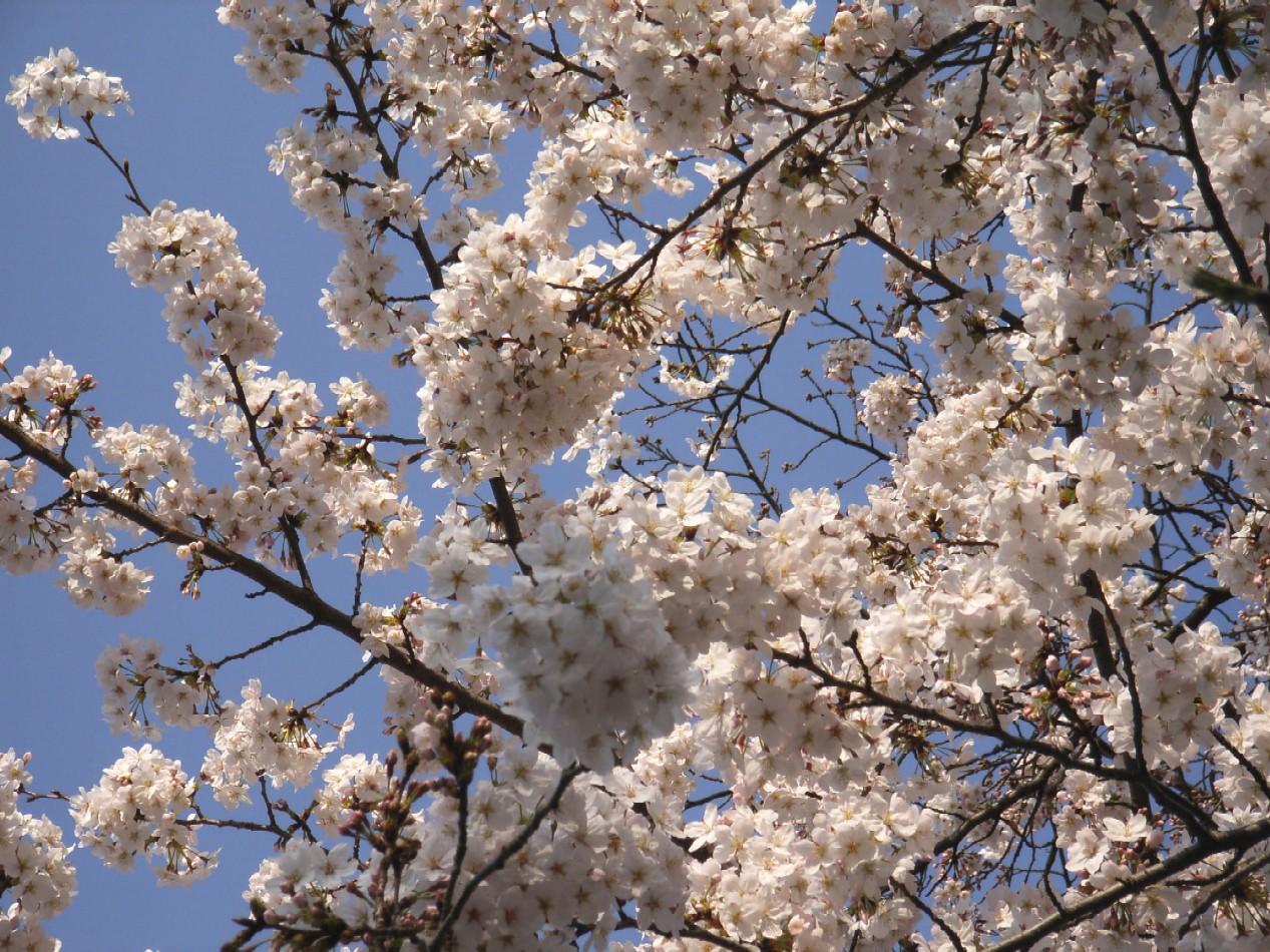 花のごとく散りにけり_d0091021_125041.jpg