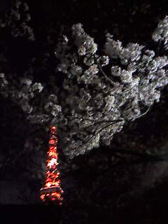 いま咲き誇る_d0091021_192534.jpg