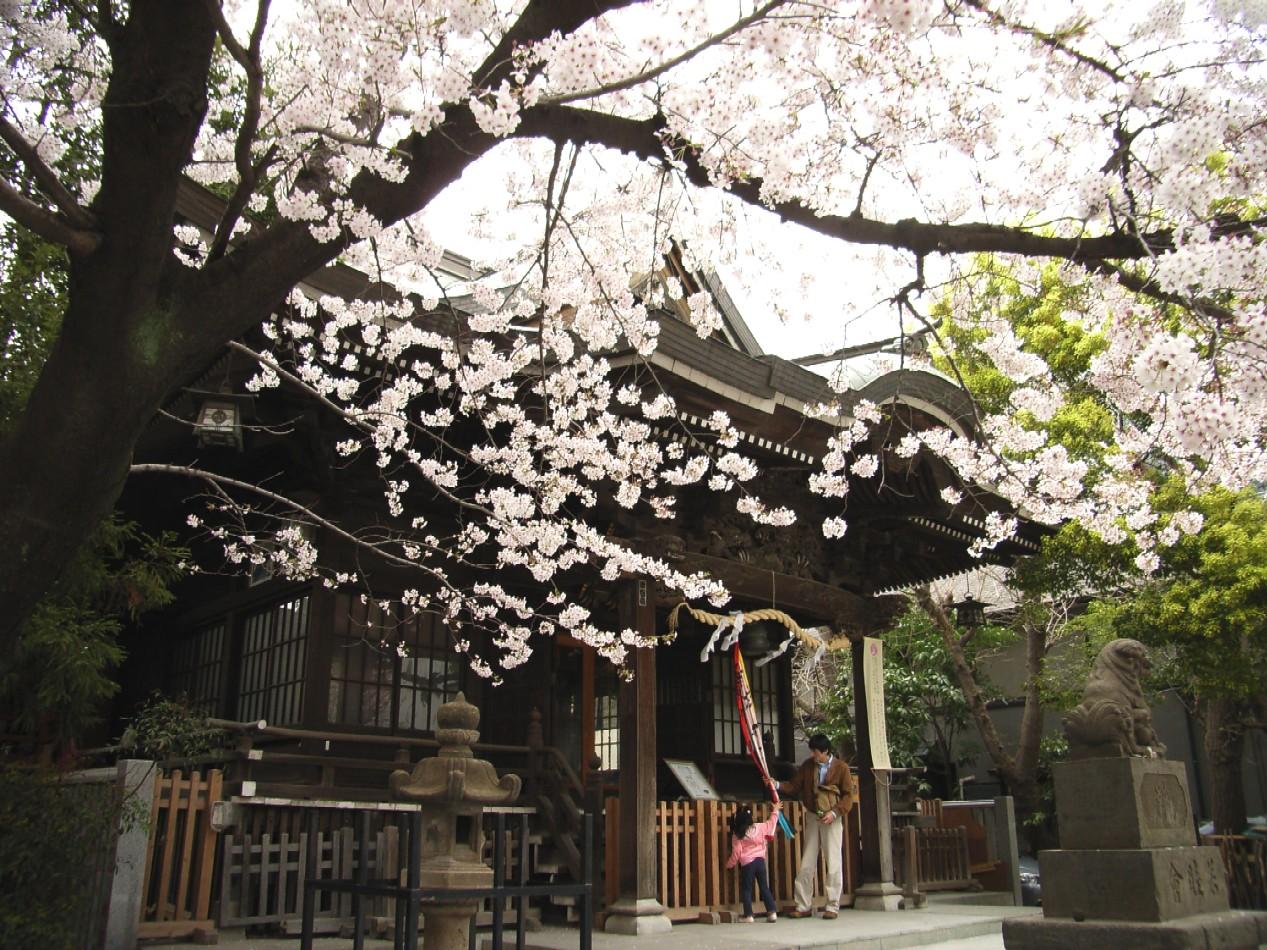 桜花散る 最後を飾る_d0091021_21565996.jpg