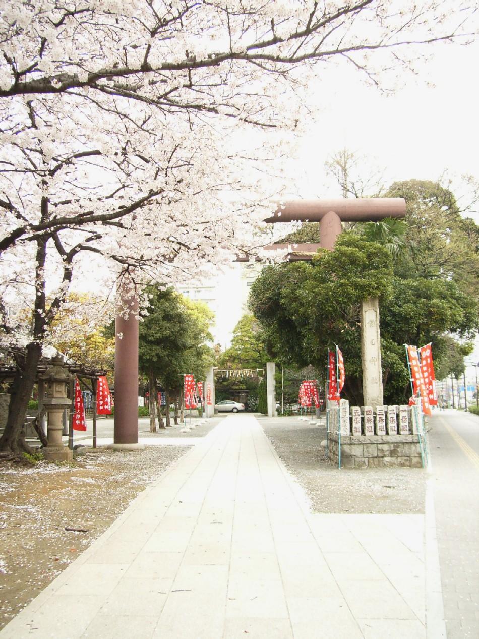 桜花散る 最後を飾る_d0091021_22192739.jpg