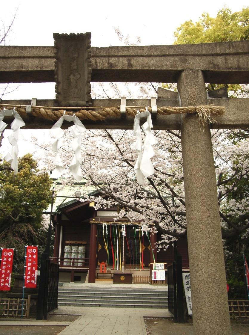 桜花散る 最後を飾る_d0091021_2248214.jpg