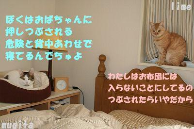 f0063729_19504613.jpg
