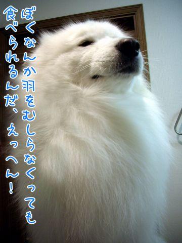 こわーいお話_c0062832_19303410.jpg