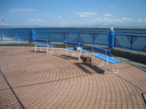 屋上から海を望んだ写真。青い柵の前に青いベンチが3つ並んで置かれています。180度海が見渡せて、格好のビュースポットです。