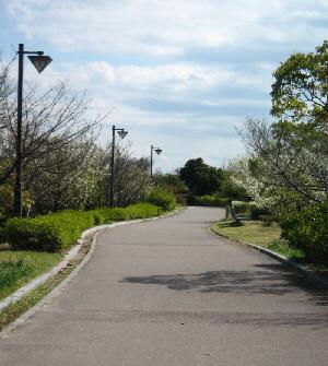 舗装道路の両側に緑が。人影の全く無い小道です。