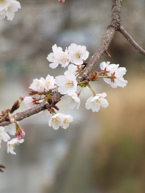 """""""春うた""""素敵な映像_b0089338_10345374.jpg"""