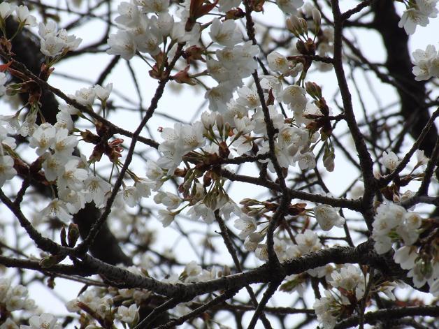 """""""春うた""""素敵な映像_b0089338_10351676.jpg"""