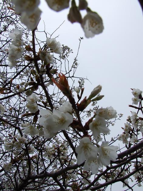"""""""春うた""""素敵な映像_b0089338_10353125.jpg"""