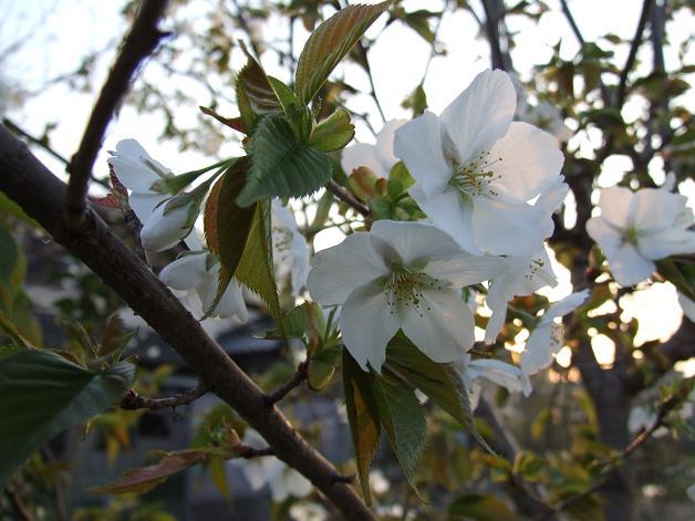 """""""春うた""""素敵な映像_b0089338_1035392.jpg"""
