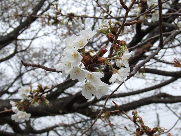 """""""春うた""""素敵な映像_b0089338_10354048.jpg"""