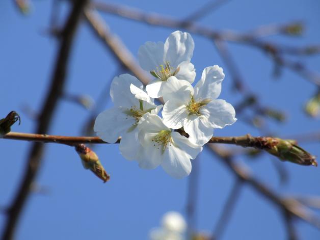 """""""春うた""""素敵な映像_b0089338_10354828.jpg"""