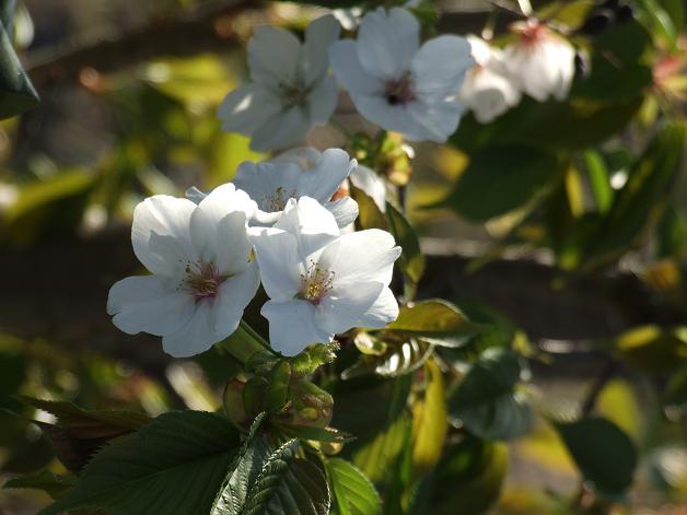 """""""春うた""""素敵な映像_b0089338_10355636.jpg"""