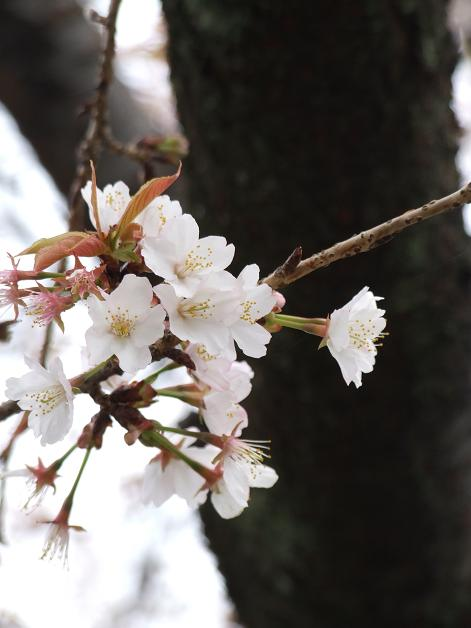 """""""春うた""""素敵な映像_b0089338_1036152.jpg"""