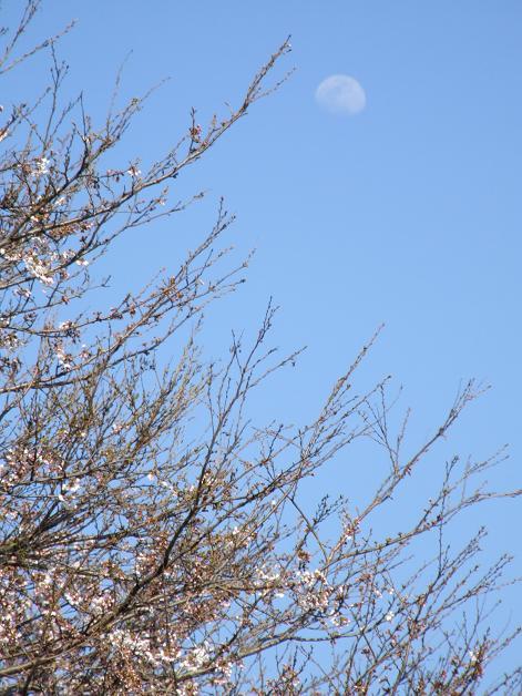 """""""春うた""""素敵な映像_b0089338_10371921.jpg"""