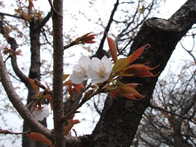 """""""春うた""""素敵な映像_b0089338_1037309.jpg"""