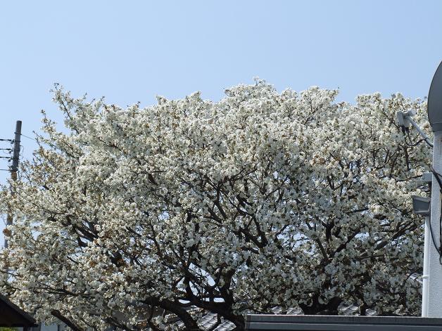 """""""春うた""""素敵な映像_b0089338_10374280.jpg"""