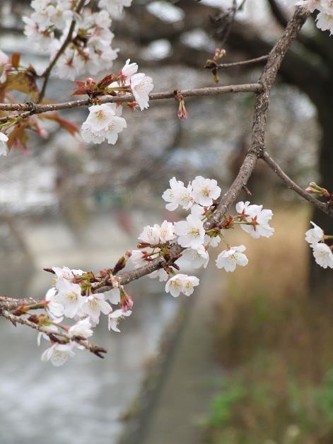 """""""春うた""""素敵な映像_b0089338_103754100.jpg"""