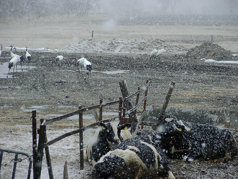 なごり雪     3月31日_f0113639_11412083.jpg