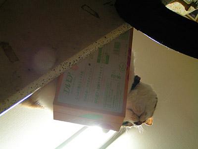 ティッシュ猫2_a0028451_10484543.jpg