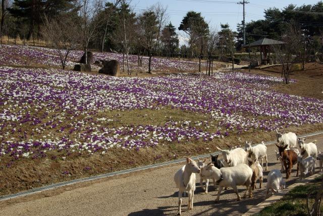 ハイジの村で花を撮る2_e0063851_034030.jpg