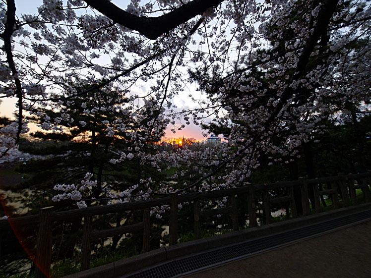雨に耐え 命燃やすや 桜花 ✿ฺ´☆`✿ฺ_a0031363_12291229.jpg