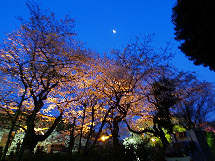 夜桜の精に惑うて迷子道 ✿ฺ´☆`✿ฺ_a0031363_13382521.jpg
