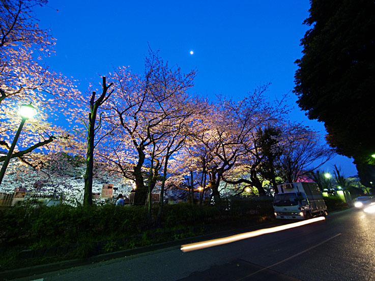 夜桜の精に惑うて迷子道 ✿ฺ´☆`✿ฺ_a0031363_1339334.jpg