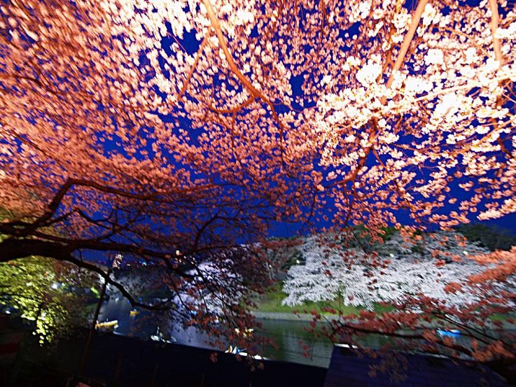 夜桜の精に惑うて迷子道 ✿ฺ´☆`✿ฺ_a0031363_1339376.jpg