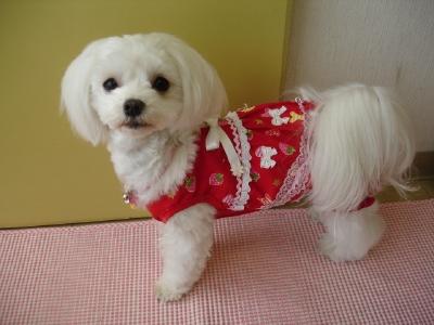 苺ママのお洋服〜と今日の桜コン_b0001465_1123357.jpg