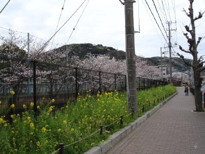 苺ママのお洋服〜と今日の桜コン_b0001465_11295783.jpg
