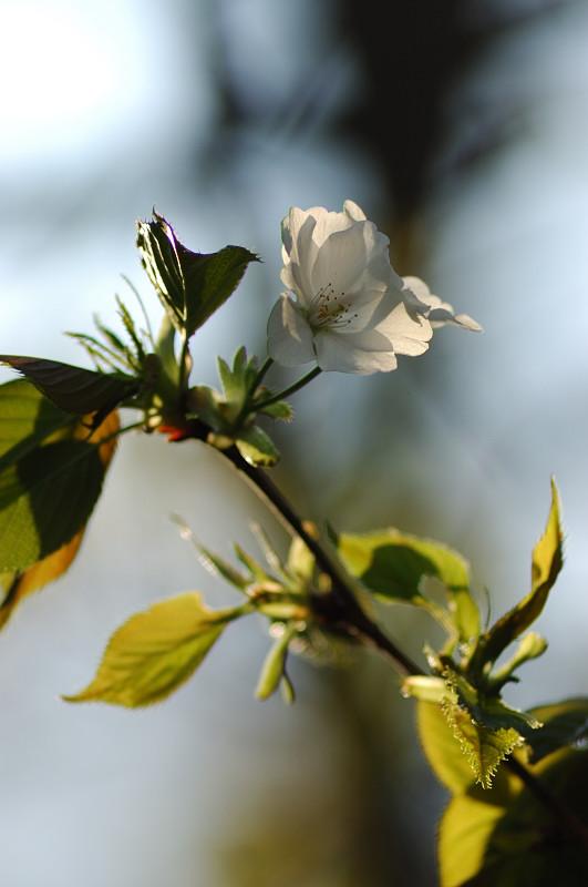 里の春_c0084666_22501690.jpg