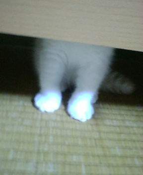 栗太郎♪_f0096569_10263120.jpg