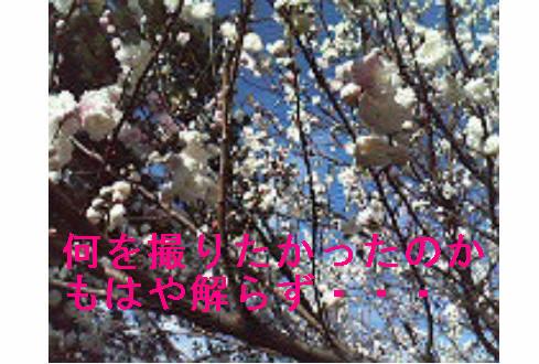 f0123589_17253396.jpg