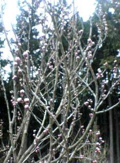 春の山 春の花_c0032193_21495463.jpg