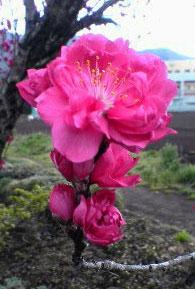 春の山 春の花_c0032193_2154138.jpg