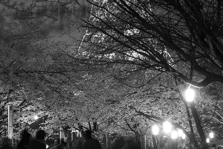 夜桜の下、蠢く