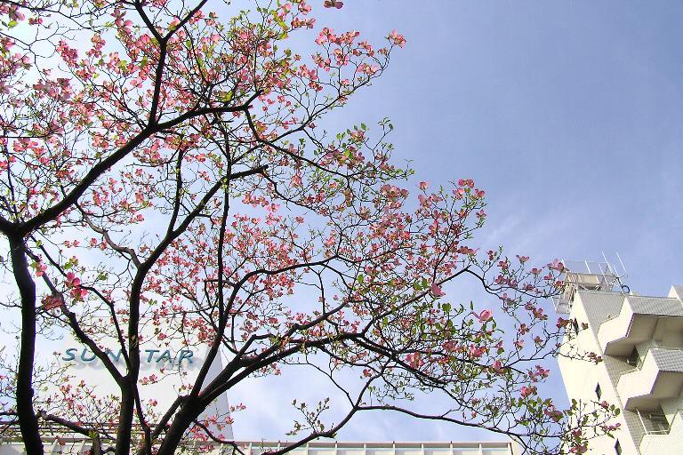 やっぱり街路樹