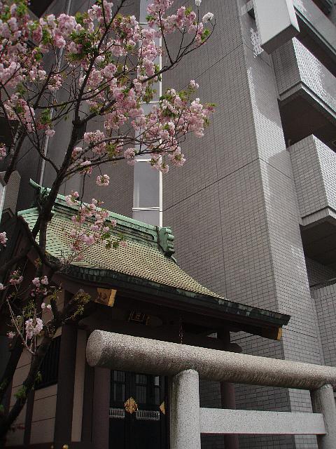 祠と1本桜