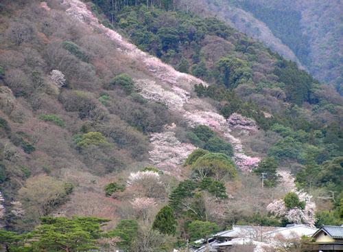 嵐山と亀山公園_e0048413_21511628.jpg
