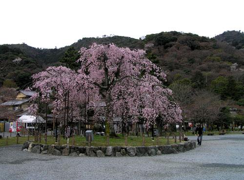 嵐山と亀山公園_e0048413_2151333.jpg