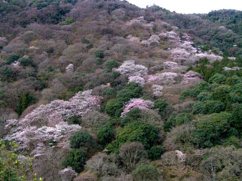 嵐山と亀山公園_e0048413_21533874.jpg