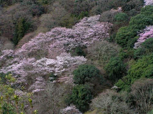 嵐山と亀山公園_e0048413_21535672.jpg
