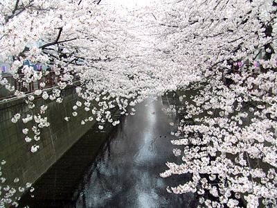 目黒川_c0052615_20303191.jpg