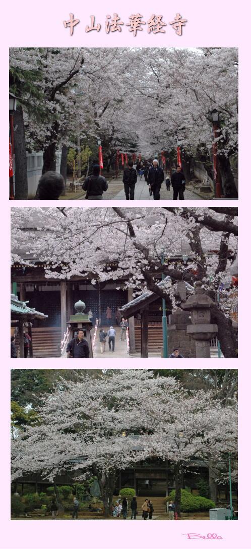 中山法華経寺界隈の桜_f0012718_1211527.jpg