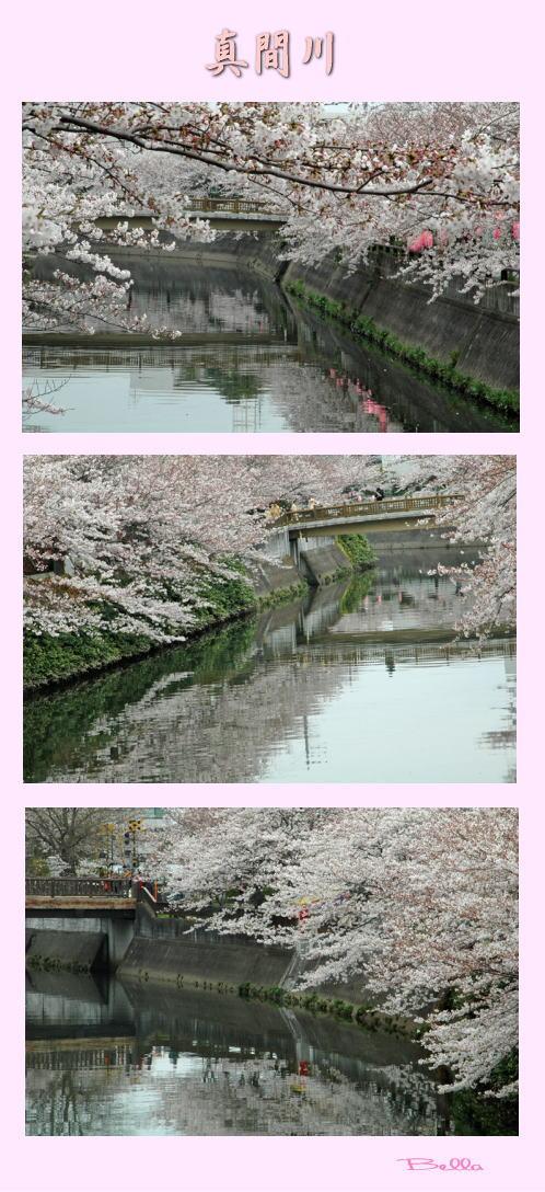 中山法華経寺界隈の桜_f0012718_195020.jpg