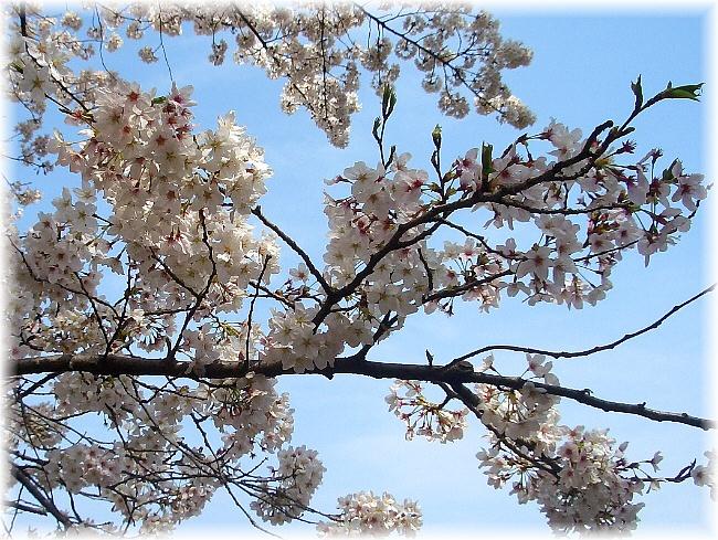 in full bloom_d0083623_1915223.jpg