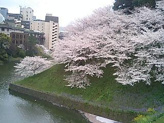 春の週末の東京_e0027033_23183628.jpg