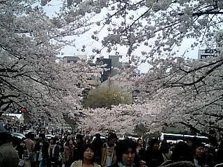 春の週末の東京_e0027033_2329853.jpg