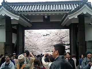 春の週末の東京_e0027033_23305657.jpg
