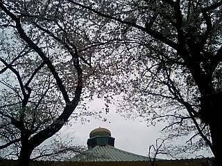 春の週末の東京_e0027033_23321858.jpg